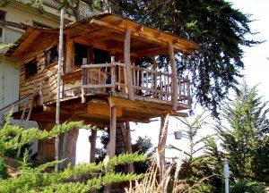 1280px-Tree_house